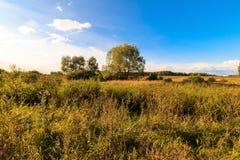 Paisaje del otoño con la hierba verde en un prado y cloudly un cielo Foto de archivo