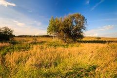 Paisaje del otoño con la hierba verde en un prado y cloudly un cielo Imagenes de archivo