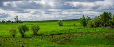 Paisaje del país de la primavera con los árboles que crecen al borde de campo de granja verde fotografía de archivo