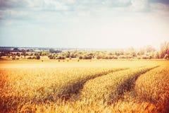 Paisaje del país del otoño o del verano tardío con el campo de granja de la agricultura y los rastros de maquinaria agrícola Camp Imagen de archivo libre de regalías