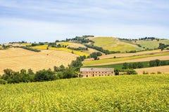 Paisaje del país en los marzos (Italia) Foto de archivo libre de regalías