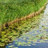 Paisaje del pantano Fotografía de archivo