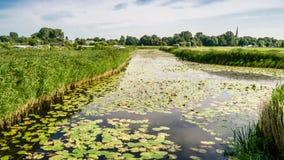 Paisaje del pantano Foto de archivo libre de regalías