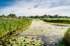 Paisaje del pantano Imagenes de archivo