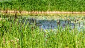 Paisaje del pantano Imágenes de archivo libres de regalías