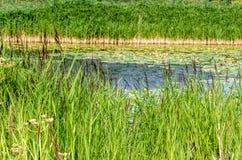 Paisaje del pantano Imagen de archivo
