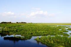 Paisaje del pantano, Tailandia foto de archivo libre de regalías