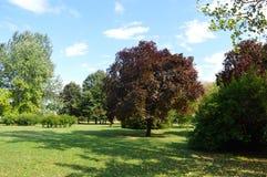 Paisaje del parque Imagenes de archivo