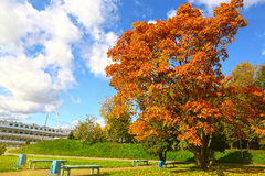 Paisaje del parque de la ciudad del otoño con la nave Imágenes de archivo libres de regalías