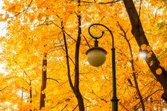 Paisaje del parque del otoño - árboles del otoño y linterna anaranjados del metal en el fondo de las hojas de otoño amarilleadas Foto de archivo