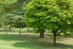 Paisaje del parque en día de verano imagen de archivo libre de regalías
