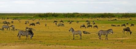 Paisaje del parque nacional de Amboseli imagenes de archivo