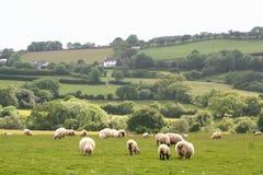 Paisaje del parque nacional de Dartmoor Foto de archivo libre de regalías