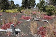 Paisaje del parque nacional de los volcanes de Hawaii Fotografía de archivo libre de regalías