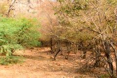 Paisaje del parque nacional de Ranthambore, la India Imagenes de archivo