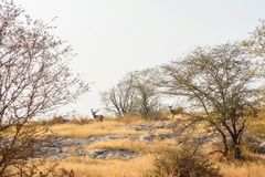Paisaje del parque nacional de Ranthambore, la India Foto de archivo libre de regalías