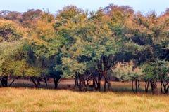 Paisaje del parque nacional de Ranthambore, la India Fotografía de archivo