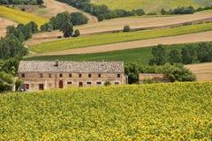 Paisaje del país en los marzos (Italia) Imagen de archivo libre de regalías