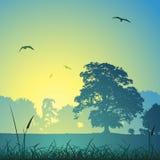 Paisaje del prado Imagen de archivo libre de regalías