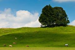 Paisaje del prado con los árboles, las vacas y la colina fotos de archivo