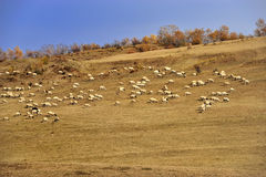 Paisaje del prado de China Bashang fotografía de archivo