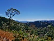 Paisaje del prado y del bosque del árbol en paisaje de la colina Fotos de archivo libres de regalías