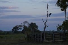 Paisaje del Pre-amanecer en un rancho tropical Imagenes de archivo