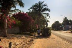 Paisaje del pueblo con el camino y las palmeras grandes en lado Foto de archivo libre de regalías