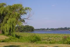 Paisaje del río Foto de archivo libre de regalías
