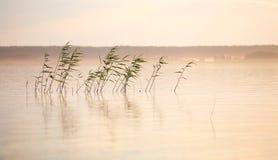 Paisaje del río con la caña y la niebla Fotos de archivo libres de regalías