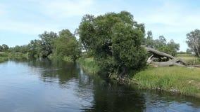 Paisaje del río de Havel en Havelland en el distrito de Brandeburgo de Alemania Adultos jovenes Sauces y prado alrededor metrajes