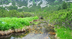 Paisaje del río de la montaña Fotografía de archivo