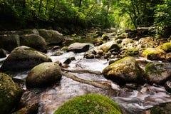 Paisaje del río en la región montañosa de taiga Imágenes de archivo libres de regalías