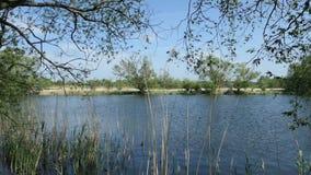 Paisaje del r?o de Havel en primavera Sauces en orilla Regi?n de Havelland en Alemania almacen de metraje de vídeo