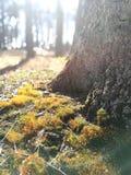 Paisaje del radiante del verano Fotos de archivo libres de regalías