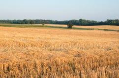 Paisaje del rastrojo del trigo con el campo de maíz Imagen de archivo