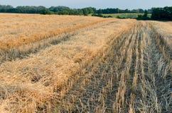 Paisaje del rastrojo del trigo con el campo del girasol Fotografía de archivo