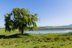 Paisaje del árbol de la presa de la granja Foto de archivo libre de regalías