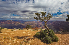 Paisaje del árbol y del cielo en Cayon magnífico Fotos de archivo libres de regalías