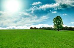 Paisaje del resorte con el árbol y el cielo azul Fotos de archivo libres de regalías