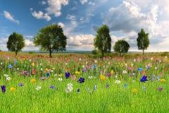 Paisaje del resorte con las flores salvajes Imágenes de archivo libres de regalías