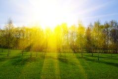 Paisaje del resorte con los árboles en la puesta del sol Foto de archivo libre de regalías
