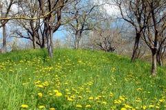Paisaje del resorte en las montañas de Rumania Imagen de archivo libre de regalías