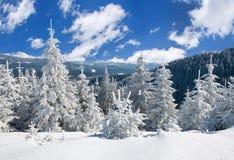 Paisaje del sol del invierno en un bosque de la montaña Imagen de archivo
