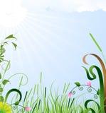 Paisaje del sol del verano Imágenes de archivo libres de regalías