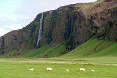 Paisaje del sur de Islandia con las cascadas y las ovejas imagenes de archivo