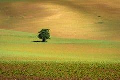 Paisaje del sur de Moravian con los campos ondulados de oro Imágenes de archivo libres de regalías