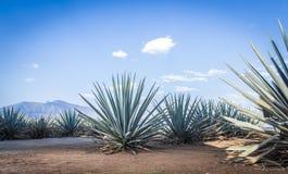 Paisaje del Tequila fotos de archivo
