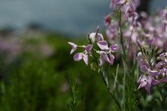 Paisaje del tiempo de primavera con las flores y el fondo borroso Imagenes de archivo