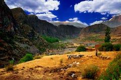 Paisaje del valle de Colca, Perú   Fotografía de archivo libre de regalías